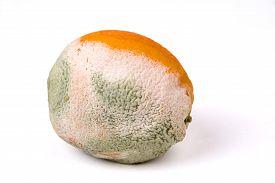 mouldy_orange_on_a_white_background_fruit_rotten_cg1p65282527c_th