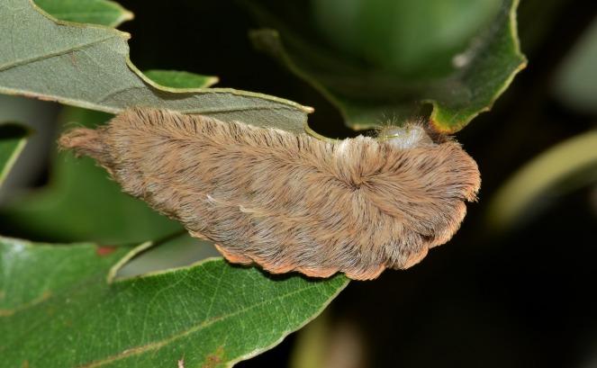 caterpillar-1572925_1920